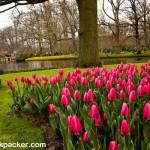 Keukenhof Gardens (05)
