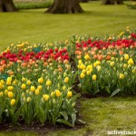 Keukenhof Gardens (25)
