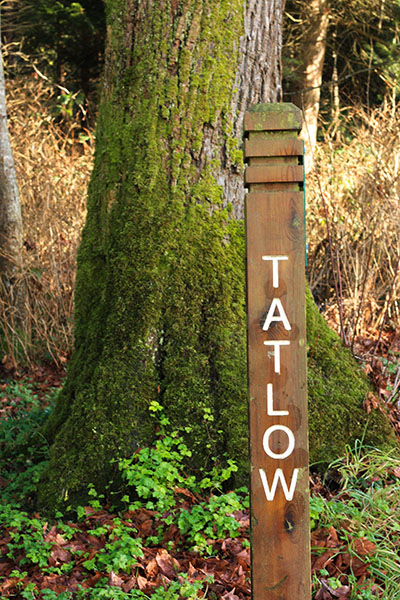 Tatlow walk