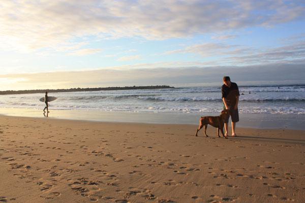 A dog on the beach in San Sebastian when Backpacking