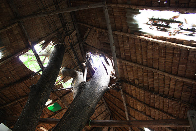 Tree Through Roof