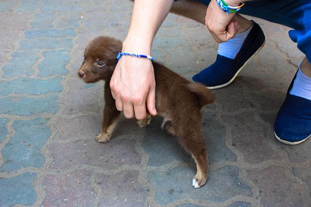 Puppy in Myanmar