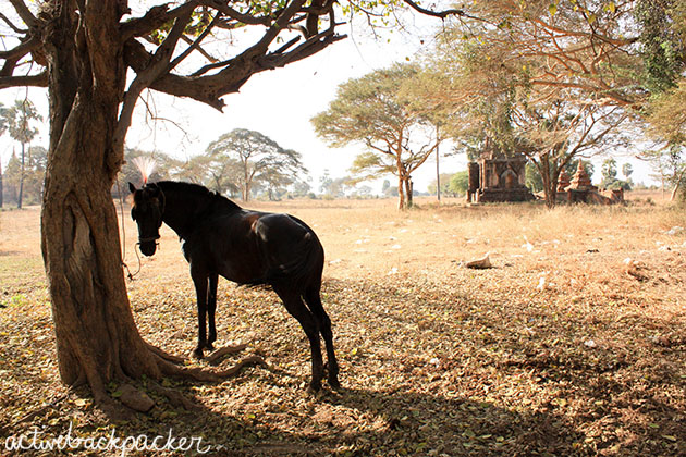 Bagan Horse