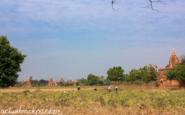 Locals Working The Fields Bagan